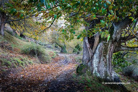 imagenes de paisajes gallegos cinco bosques para disfrutar del oto 241 o en castilla y le 243 n