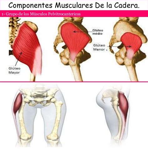 anatomia de la cadera anatomia y semiologia de cadera