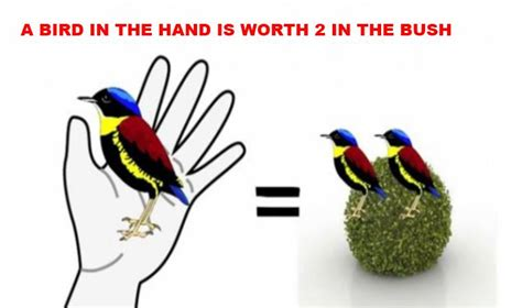 two in the bush a bird in the is worth two in the bush learn fluent