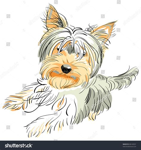 yorkie back leg problems color sketch terrier and black stands on its hind legs stock photo