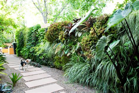 How To Plant A Living Wall Sunset Plants For Garden Walls