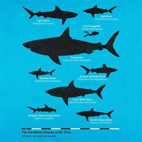 megalodon shark size 17 best images about megalodon on pinterest megalodon