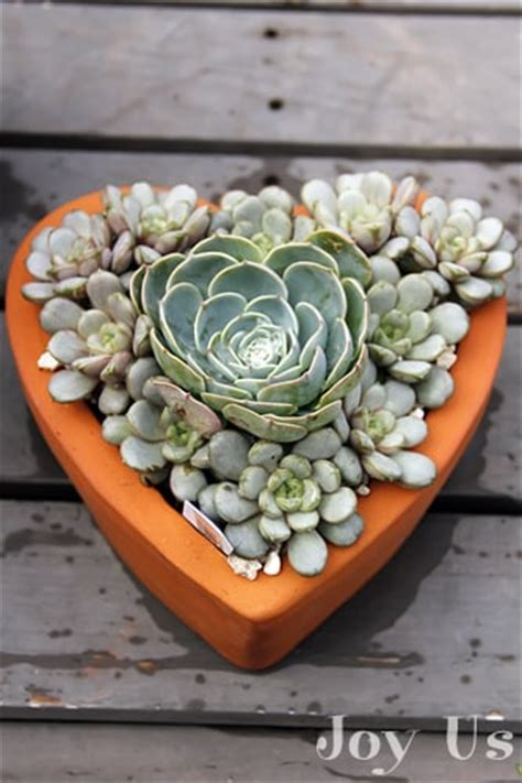succulents meaning succulent gardens and plantings