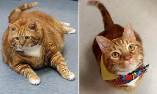 Fat cat named Skinny slims down from 41 to 19 pounds
