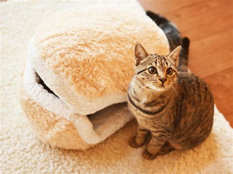 cat hamburger bed this cat burger bed will turn your cat into an adorable