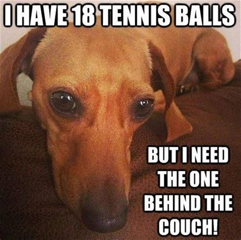 Funny Dachshund Memes - animal pictures with captions dumpaday 3 dump a day