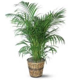 purify indoor air with house plants expert advice
