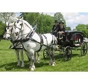Bee Tree Trail Cinderella Carriage White Horse Weddings