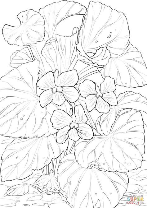 coloring page of violet flower wood violets coloring page free printable coloring pages
