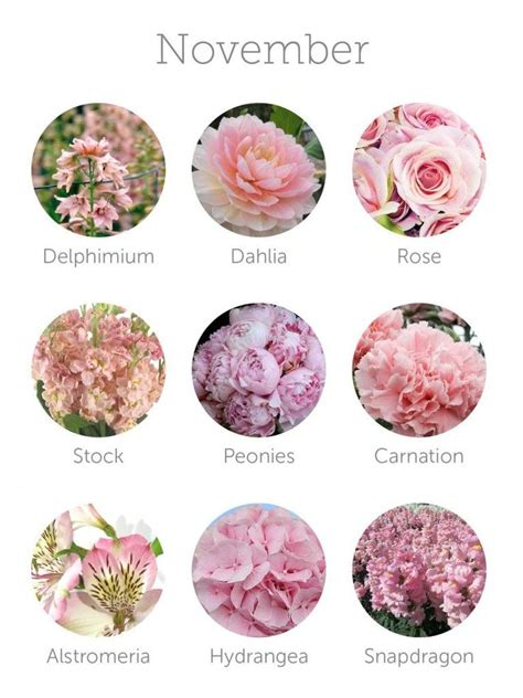 Flowers In November | 315 best images about tattoo inspiration on pinterest