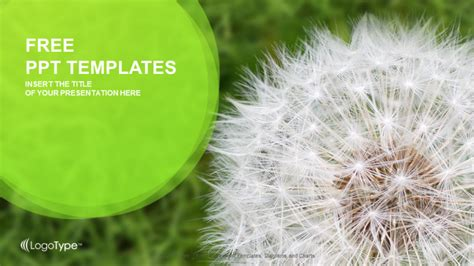 dandelion on grass nature ppt templates