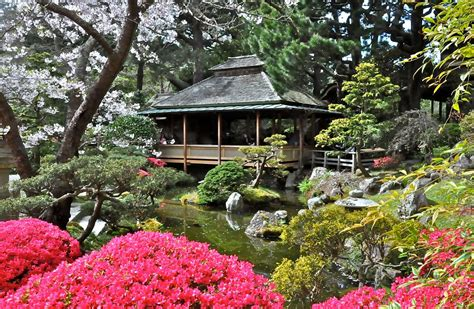 Seoul Garden Sf by The 10 Best Trees To With In San Francisco