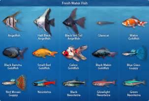 animals research aquarium fish