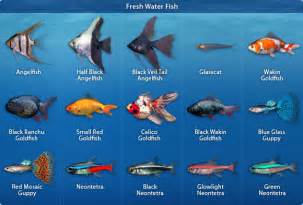 Fish popular culture types of aquarium fish with names