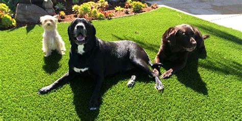artificial grass for dogs artificial grass best for dogs always green synthetic grass