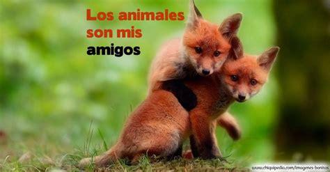 imagenes relajantes de animales las mejores im 193 genes de animales salvajes y dom 233 sticos