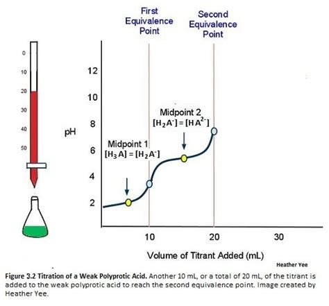Water 20ml Strong Acid 20ml titration of a weak polyprotic acid chemistry libretexts