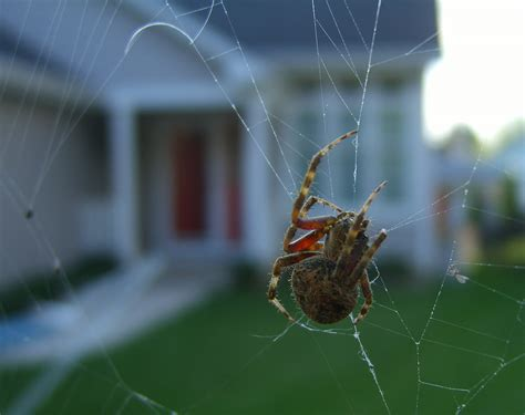 sw spider house house spiders in ohio