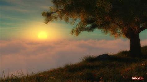 evening nature wallpaper