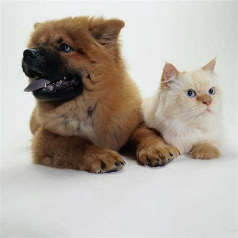 kittens puppies how do cats interact with kittens or puppies pets