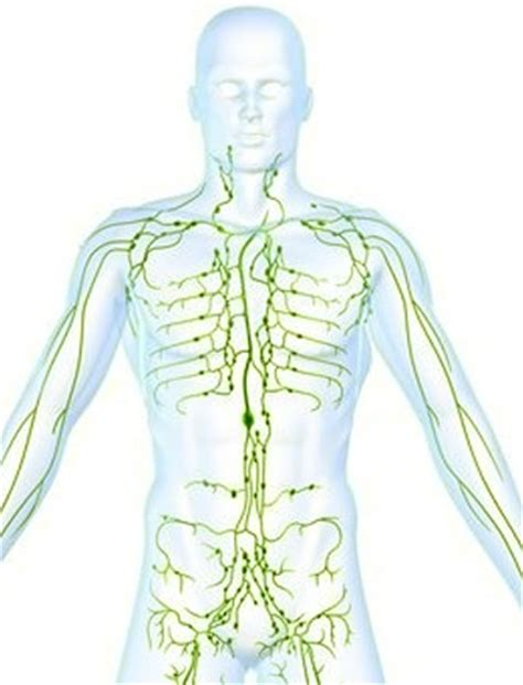 lymph node locations groin diagram lymph node locations picture diagram structures functions