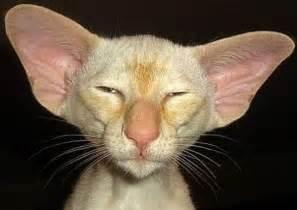 ugly cats 46 pics