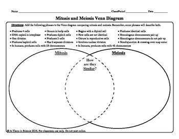 meiosis vs mitosis venn diagram mitosis and meiosis venn diagram by a thom ic science tpt