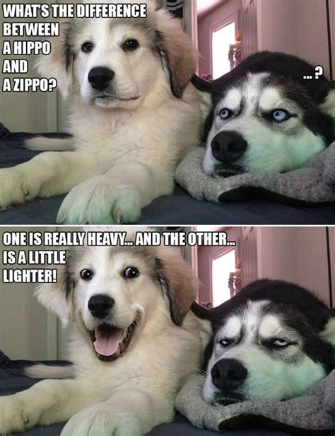 punny dog jokes   husky  sick  hearing