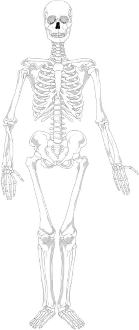 Human Skeleton Blank Clip Art at Clker.com - vector clip