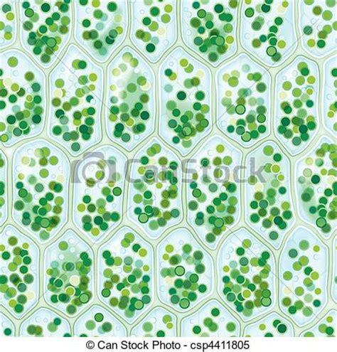 cell pattern en français clipart vector of chlorophyll cells seamless pattern
