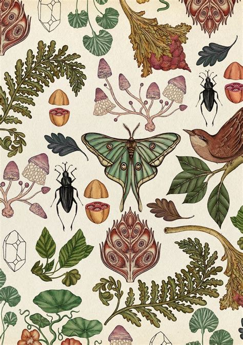 botanical print wallpaper 59 best herb botanical prints and illustrations