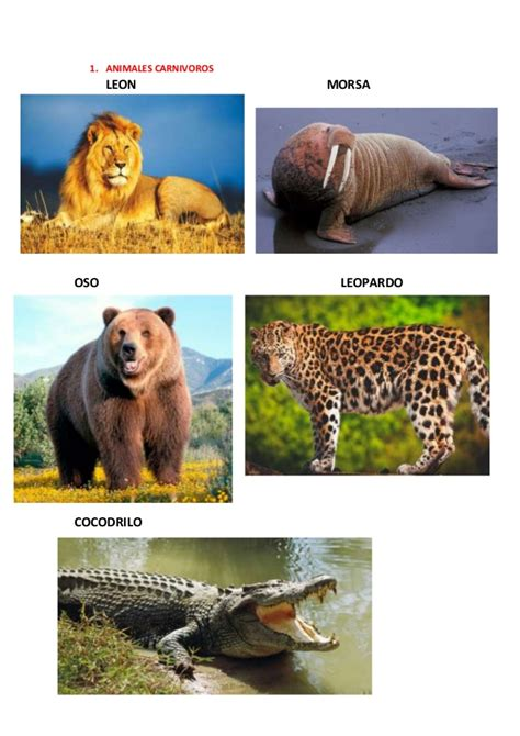 imagenes de animales hervivoros omnivoros y carnivoros animales carnivoros