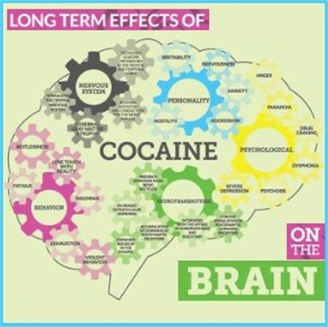 Effects Of Detox On The Brain by 25 Best Ideas About Effects Of Cocaine On