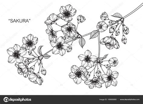 outlines rubber sts cherry blossom flower line drawing flowers ideas