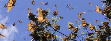 casa delle farfalle bordano orari casa delle farfalle un angolo di paradiso a bordano