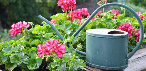 Welche Balkonpflanzen Vertragen Viel Sonne by Balkonblumen Tipps Zur Pflanzung Und Pflege Herold At