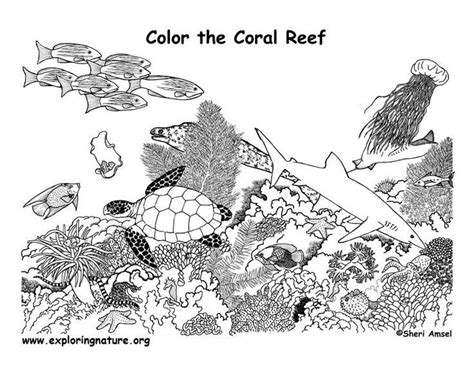 coral reef food web coloring pages google search coral