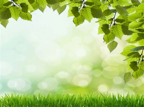 beautiful green grass free ppt backgrounds for your