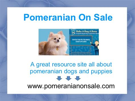 facts about pomeranian puppies facts about pomeranians