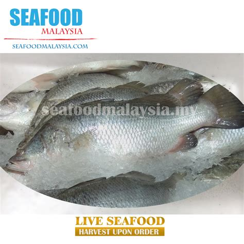 Udang Laut Size 48 50 malaysia selling fresh seafood