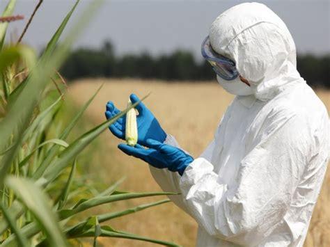 biotecnologia alimentare ogm tutto quello che c 232 da sapere sugli alimenti