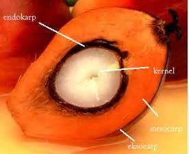 Faktor Yang Mempengaruhi Minyak Kelapa Sawit thophick st embrio rescue pada tanaman kelapa sawit