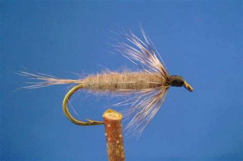 grey nymph pattern gray nymph dan s fly shop and guide service fishing