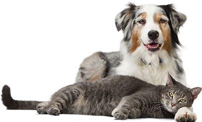 banfield puppy plan optimum wellness plans pet health plans for dogs cats by banfield pet hospital 174