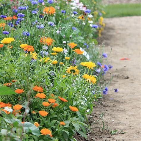 immergrüne pflanzen für sonnige standorte balkonblumen f 252 r sonnige standorte gestaltungsbeispiele