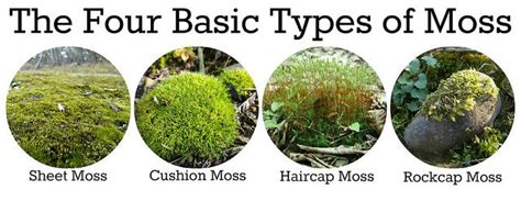 the four basic types of moss hydroponics ღ small