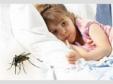Dengue Fever Infected Mosquito Bites On Children