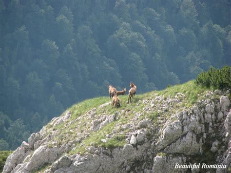 Landscape Pictures With Animals Romania Images Beautiful Landscapes Carpathians