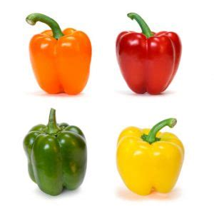 bell peppers for dogs can dogs eat bell peppers and a word of warning