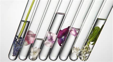 quali sono i fiori commestibili fiori commestibili quali sono e come si usano i fiori edibili